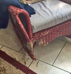 Chair after frustrated pet
